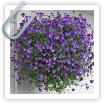 Hanging Baskets and Container Planting