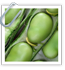 Broad Beans for Beginners