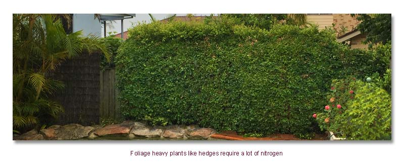 Hedges need nitrogen