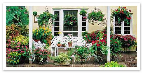 Hanging basket heaven