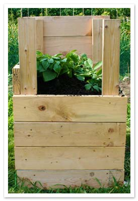 Stacker trays for growing potatoes