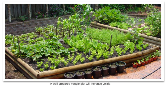 Healthy veggie plot