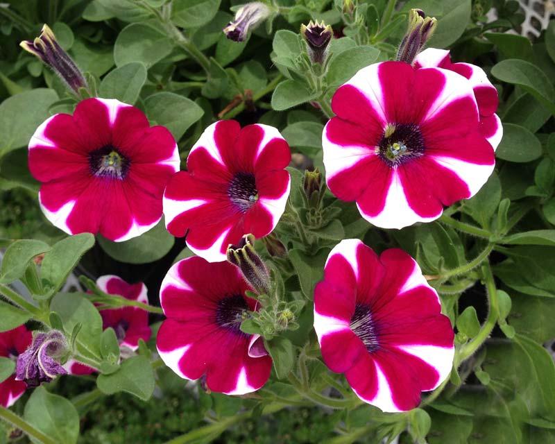 hot pink flower border
