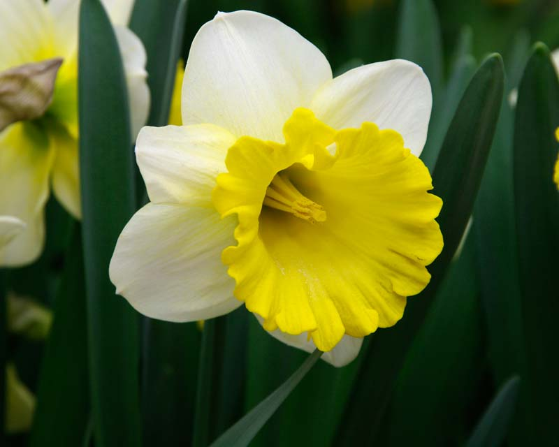 Narcissus Attraction
