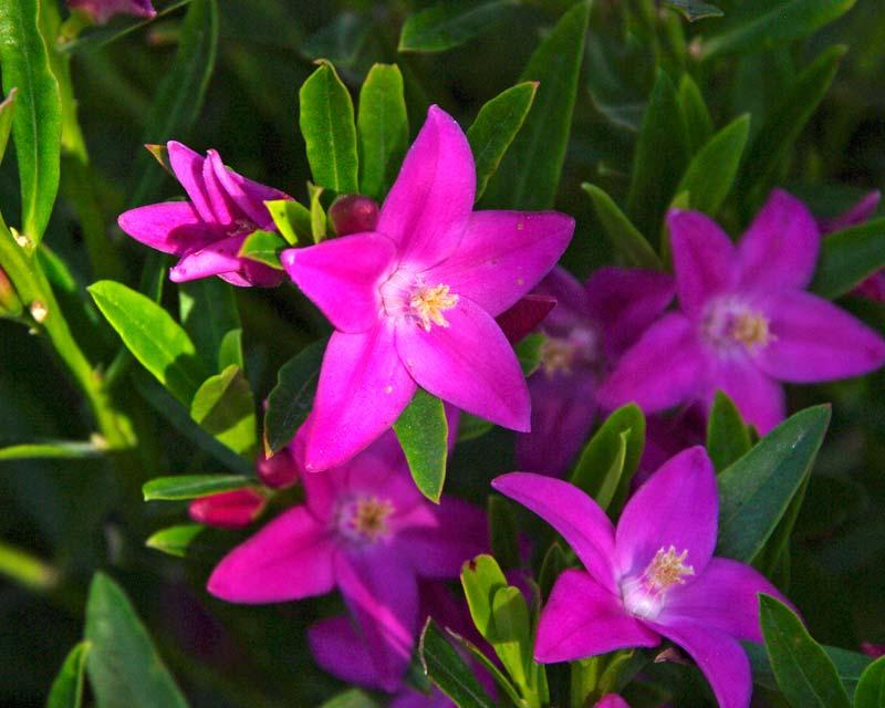Light Pink Garden Shed