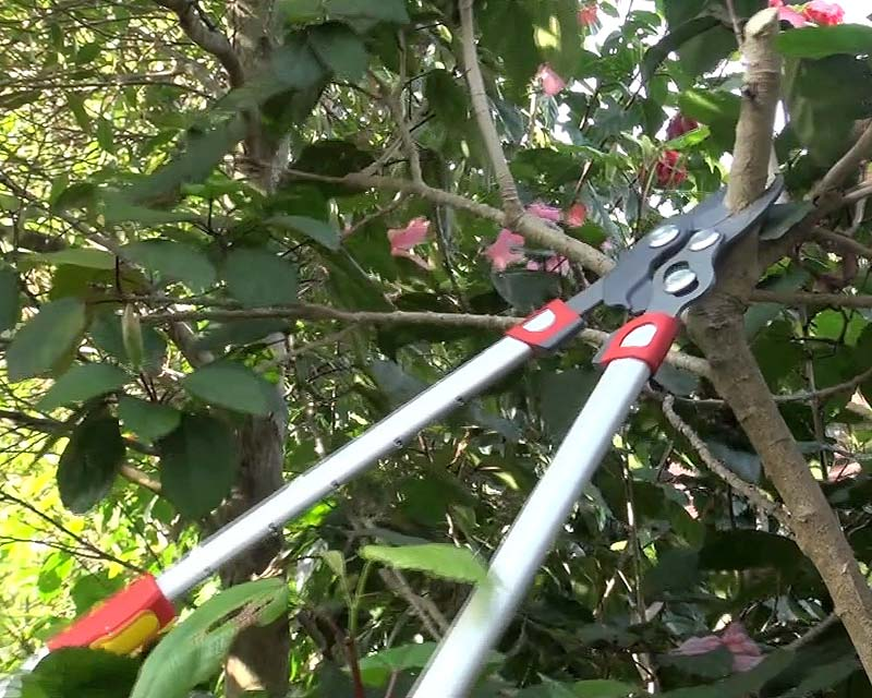 Extended arms mean pruning with less use of ladders