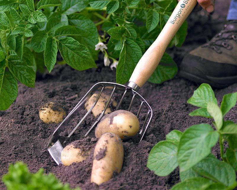 Potato Harvesting Scoop