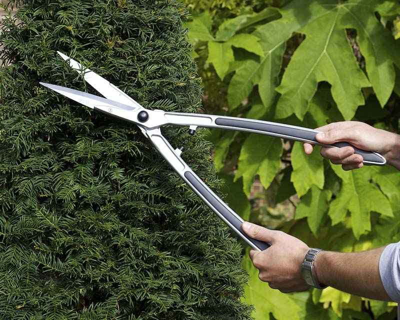 Topiary Hedge Shears by Burgon and Ball