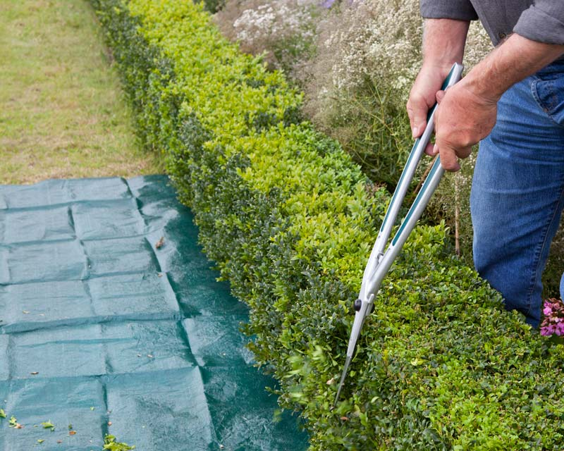 Topiary Hedge Shears in use