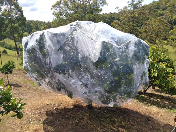 Large sized fruit tree net