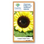 Compact FleuroSun Calypso Spray Sunflower