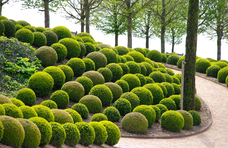 View Topic The Topiary Thread