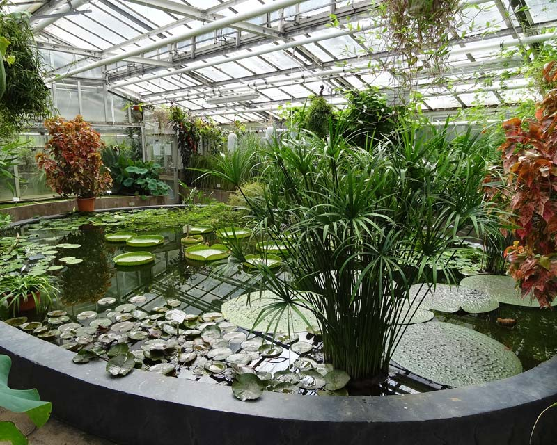 gardensonline berlin botanischer garten gardens of the world. Black Bedroom Furniture Sets. Home Design Ideas