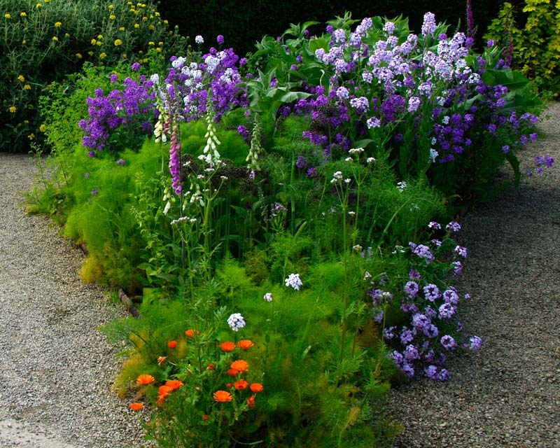Flowers and herbs growing in harmony at Losely Park