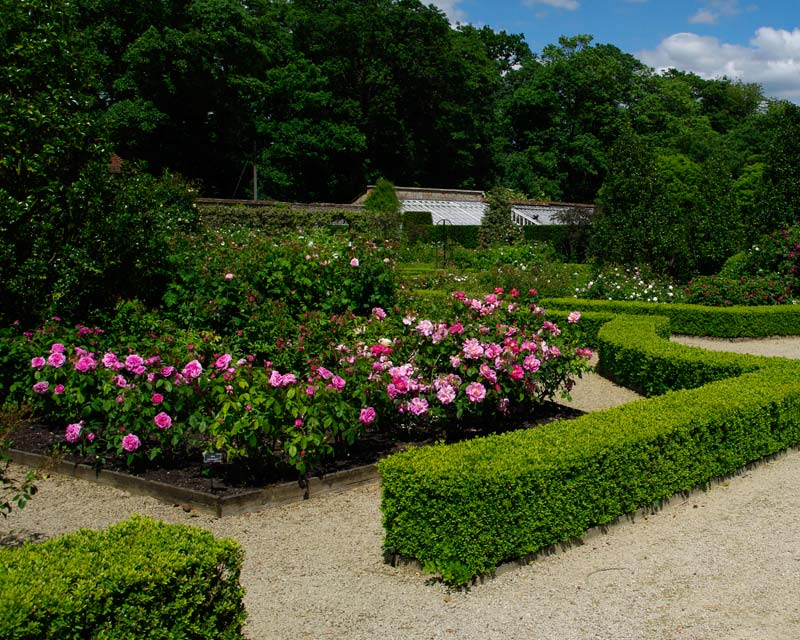 Losely Park has an impressive rose garden