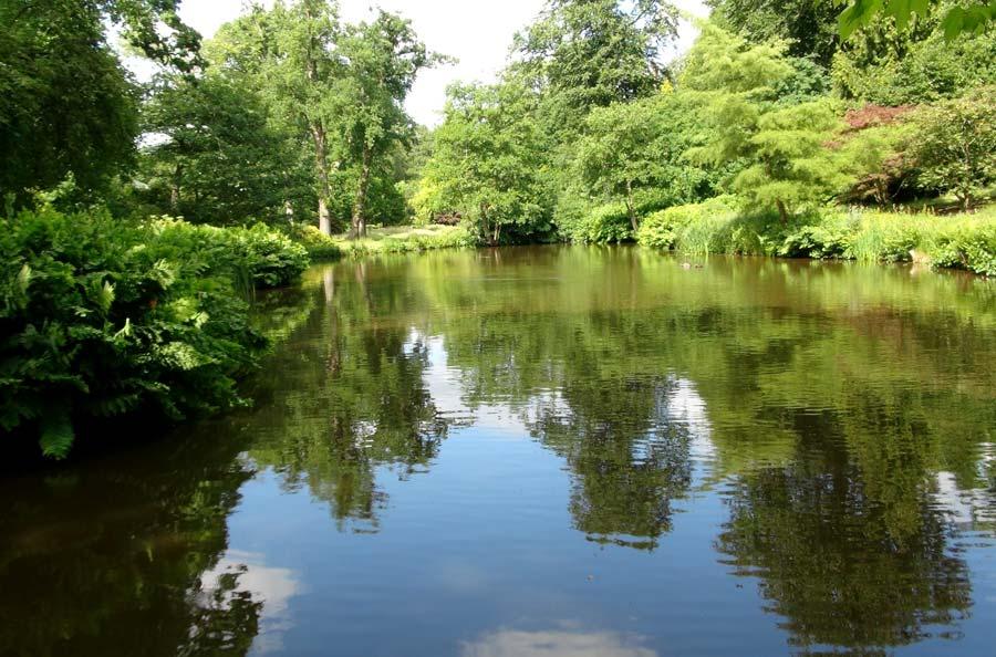 Savill Garden - The Far lake
