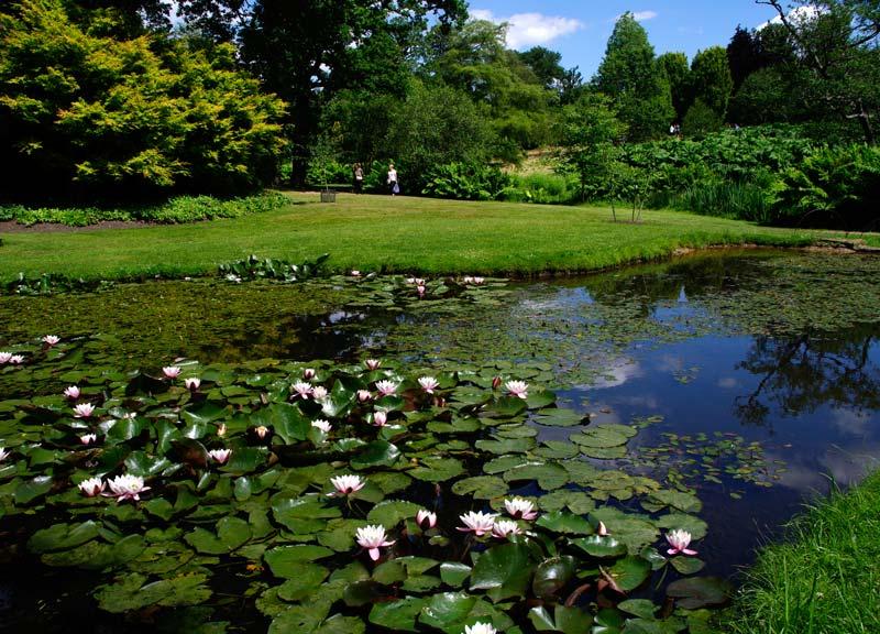 Savill Gardens - The Lily Pond