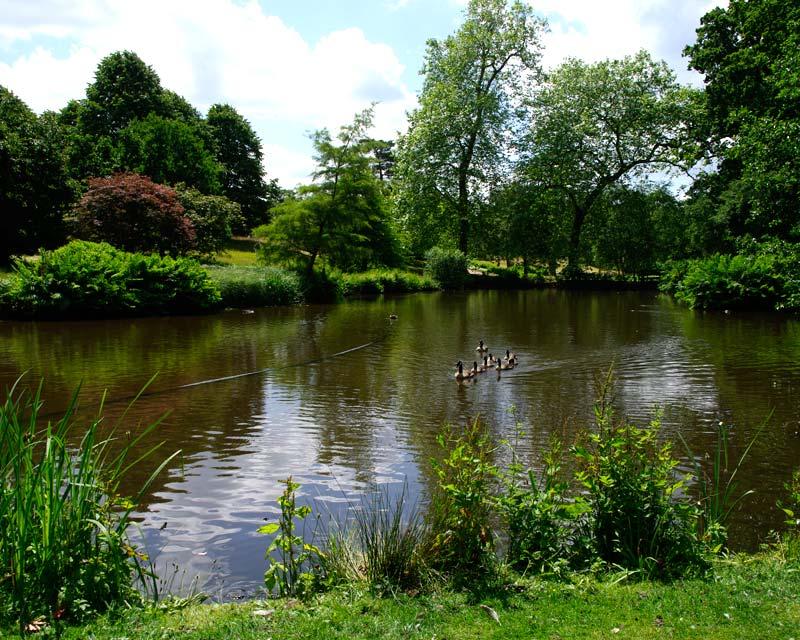 Savill Gardens - Middle Lake