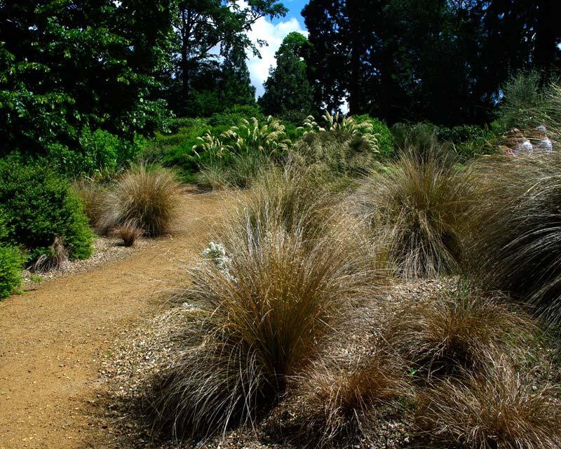 Savill Gardens - New Zealand Garden
