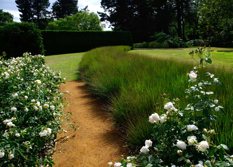 Savill Rose Garden - Lavender is used to add contrast and highlight the roses