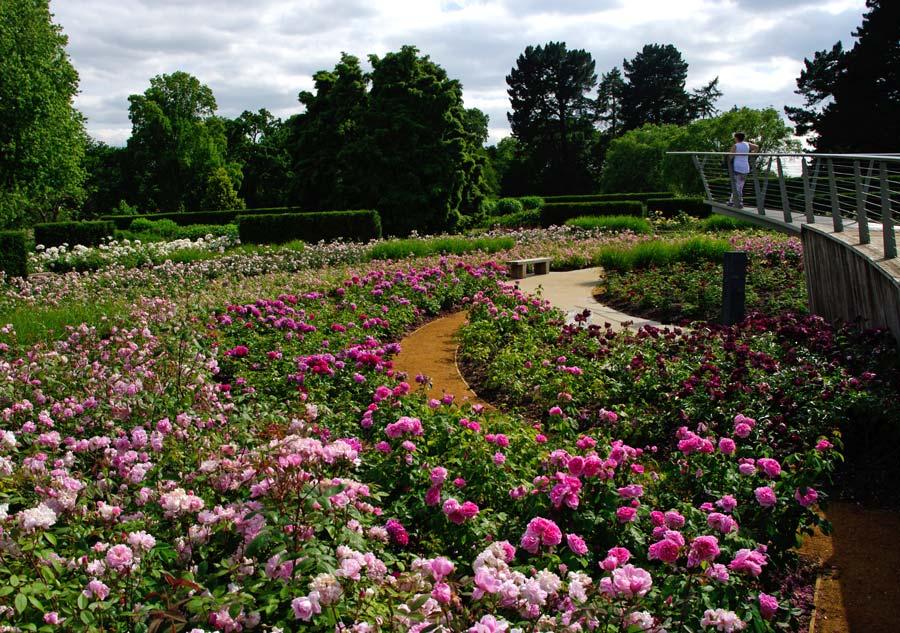 Savill Gardens - Rose Garden
