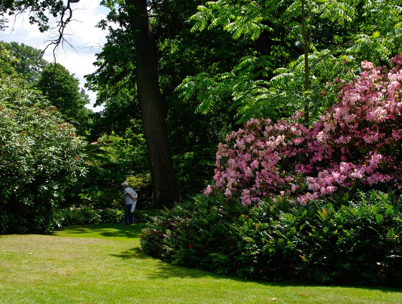 Savill Gardens Spring Wood