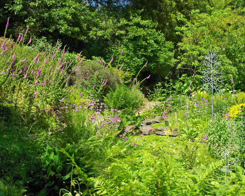 The Bog Garden - Sir Harold Hillier Gardens