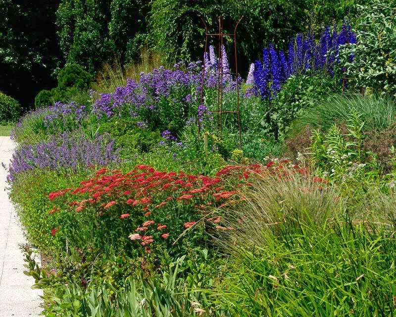Salvia, Delphinium and Achillea - Centenary Border at Sir Harold Hillier Garden