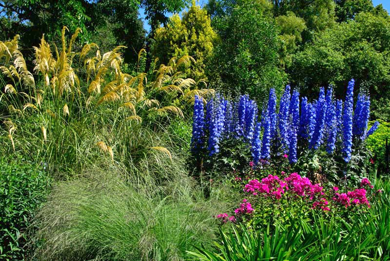 Attractive plantings include Pampas Grass and Delphinium  - Centenary Border Sir Harold Hillier Gardens