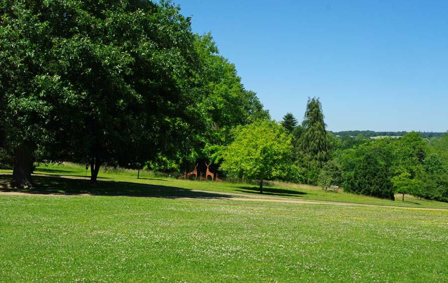 The Main Lawn - Sir Harold Hillier Gardens