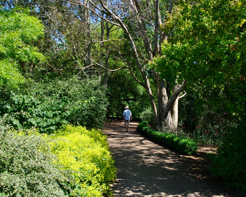 Enjoy a shady walk through the National Collection Glade - Sir Harold Hillier Gardens