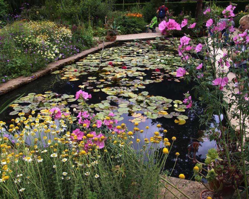 Hidcote Lily Pond