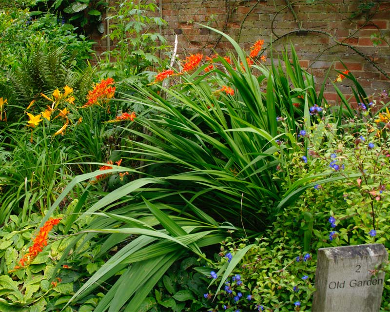 Crocosmia in the Old Garden at Hidcote