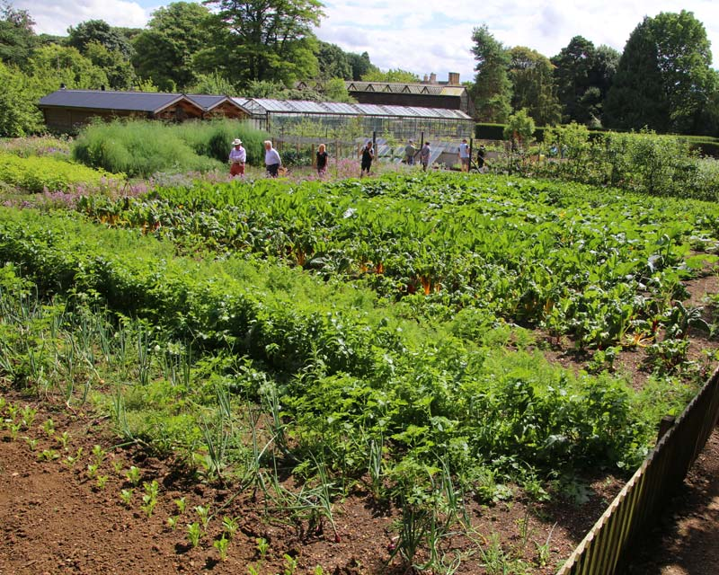 Kitchen Garden at Hidcote