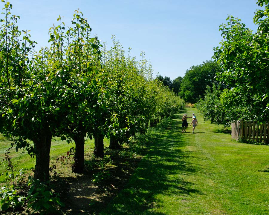 Pear Walk - Waterperry Gardens