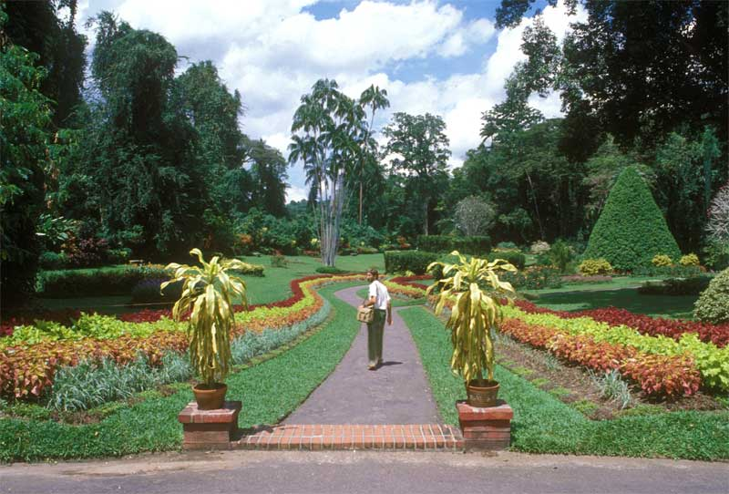 Mature gardens with sweeping lines and towering trees - Royal Botanic Gardens Peradeniya