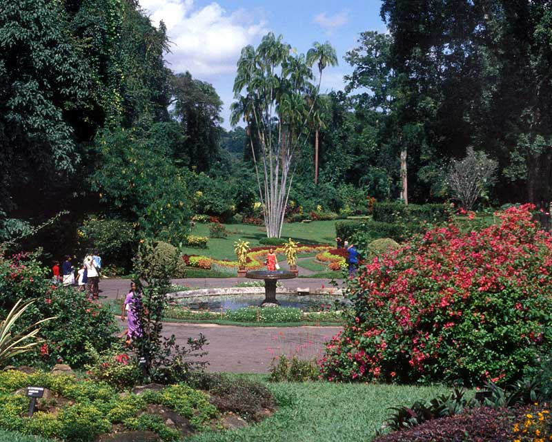 Very lush, tropical plantings - Royal Botanic Gardens Peradeniya