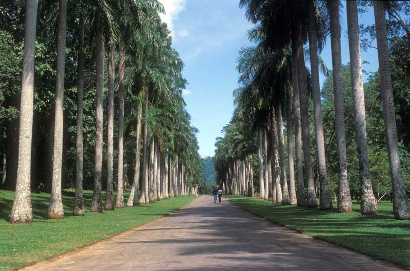 An excellent gardens to visit - Royal Botanic Gardens Peradeniya