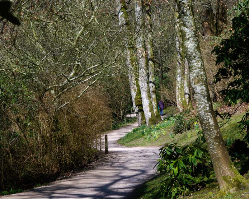 Paths towards lake - Stourhead Gardens