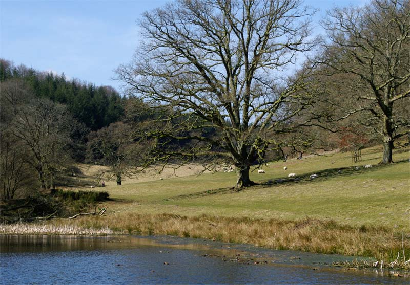 Walk to St Peter's Pump - Stourhead Gardens