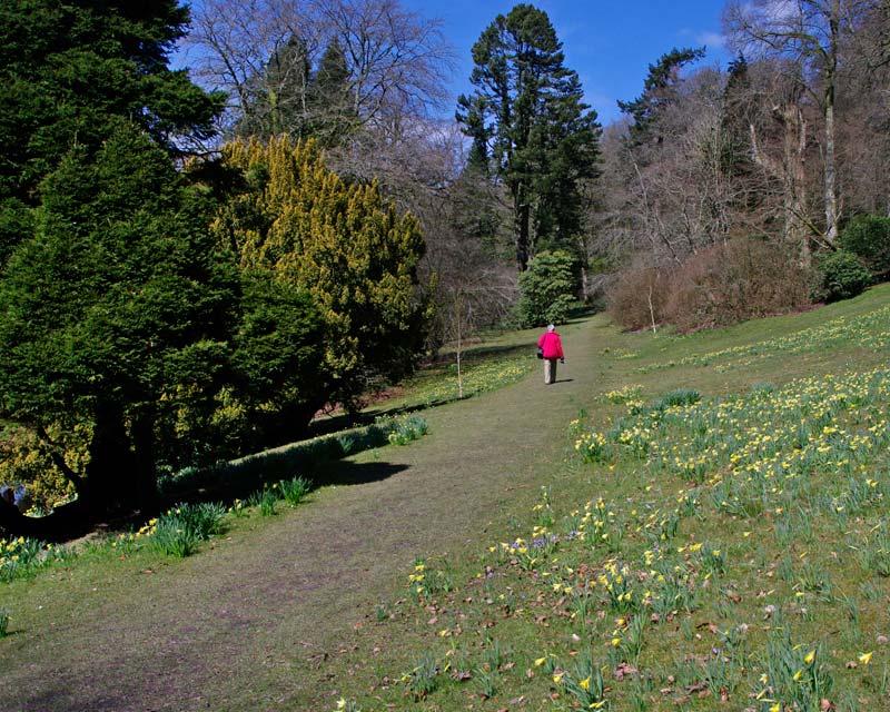 Upper Garden Walk - Stourhead Gardens
