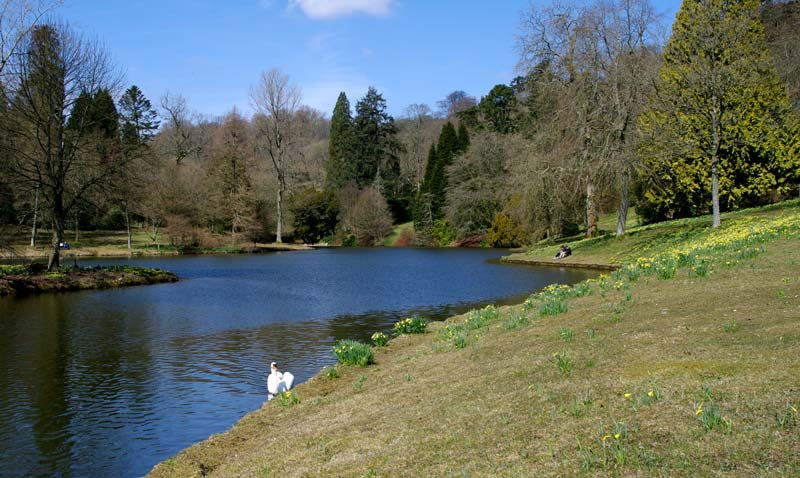 Banks of the lake - Stourhead Gardens