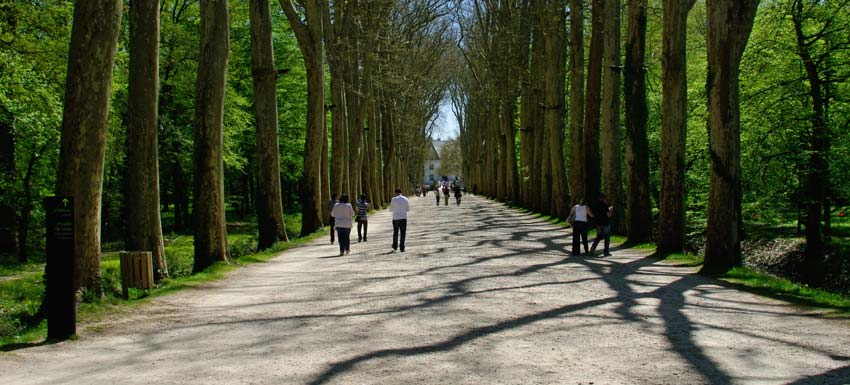 The approach drive to the chateau, suitably grand. - Chateau de Chenonceau