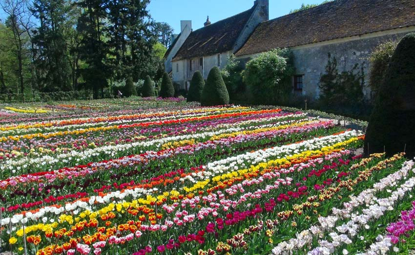 Tulips in the flower garden - Chateau de Chenonceau