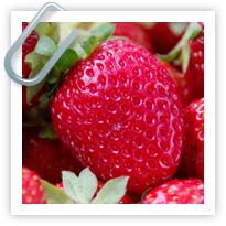 Strawberries - how to plant and raise them