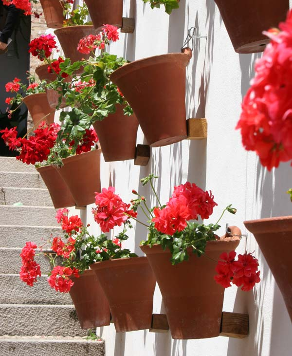 Wall Mounted Pelargoniums