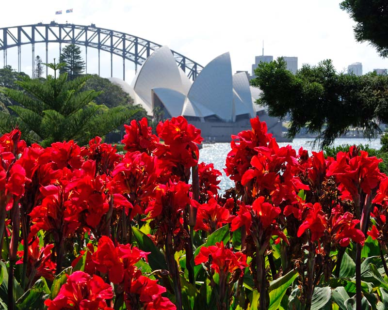 Sydney royal Botanic Gardens makes a spectacular setting for plants, especially when they are as bright as these Canna Lillies.