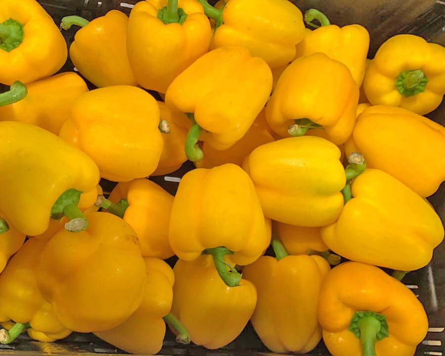 Capsicum annum - Bell Peppers, Yellow variety