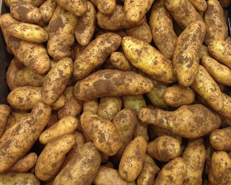 Solanum tuberosum Kipfler - the Kipfler potatoe
