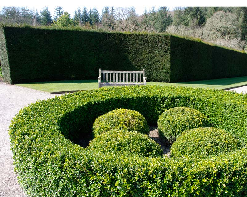 Buxus sempervirens - so good for clean edged shapes.